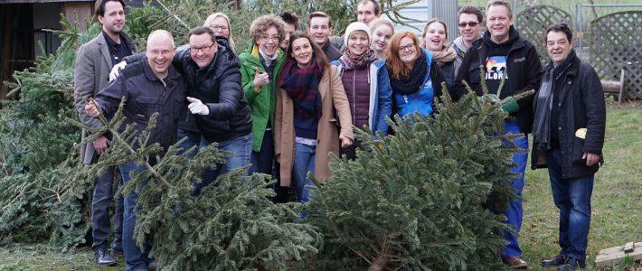 Dresden Weihnachtsbaum entsorgen für den guten Zweck
